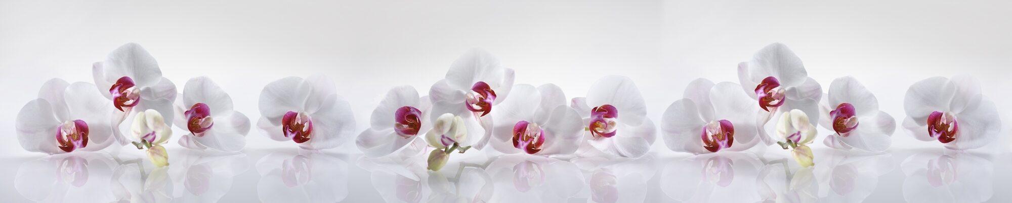 отправилась отдыхать фото на стекле ветки орхидеи уходить стереотипа